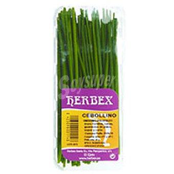 Herbex Cebollino Bandeja 20 g