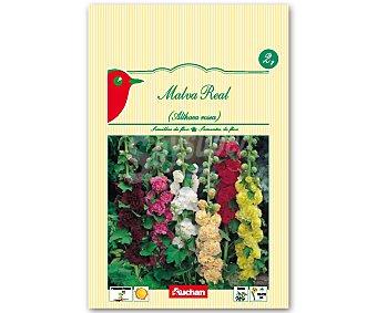 Auchan Semillas para plantar malva real 2 Gramos