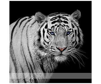 IMAGINE Cuadro con la imagen de un tigre sobre fondo negro y dimensiones de 28x28 centímetros 1 unidad