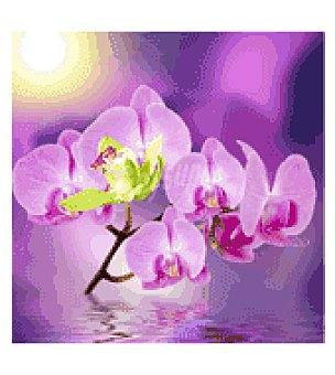 Lámina 50X50 orquidea