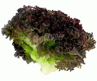 Lechuga Lollo Verde hortaliza 1 unidad