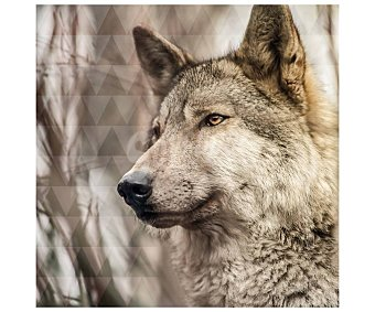 Lienzo de hermoso retrato de lobo en el bosque, impreso en canvas, lamina 45x45 cm, artis.