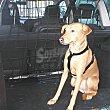 Red separadora de mascotas para coche 80x60 cm 1 unidad 1 unidad Bricar