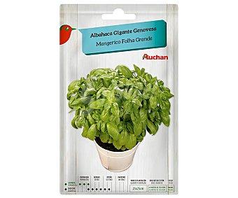 Producto Alcampo Sobre de semillas para plantar albahaca de la variedad Genovesa de tamaño grande 2 alcampo
