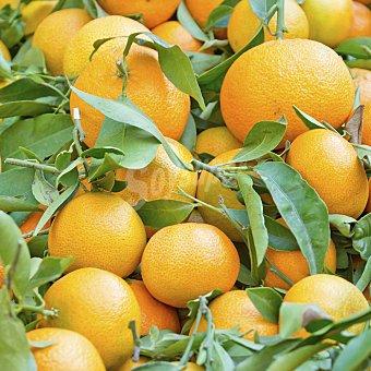campo Naranja con hoja directa del 1000.0 g.