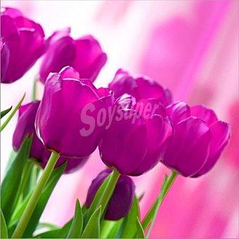 Papstar Servilletas decorado tulipanes rosas 33X33 cm Paquete 20 unidades