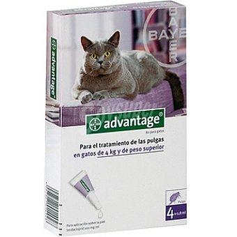 BAYER ADVANTAGE Pipetas para el tratamiento de las pulgas para gatos de más de 4 kg envase 4 unidades 4 kg