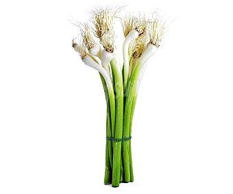 Ajetes verdes en manojo130 gramos