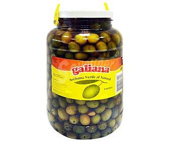 Galiana Aceitunas partidas Tarro de 2,5 Kilogramos
