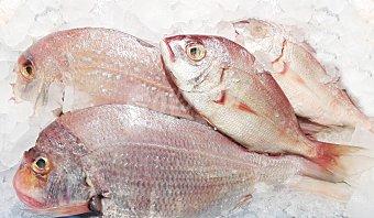 VARIOS Denton fresco granel 800 g peso aprox.
