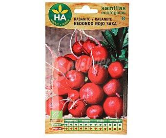 HA-Huerto y Jardín Semillas ecológicas para sembrar calabaza de la variedad Butternut 1 sobre