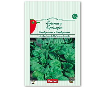 Auchan Semillas para sembrar espinacas de la variedad Viroflay Semillas Espinacas