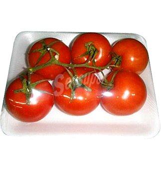 Rama Tomate en 6 unidades 1100 G