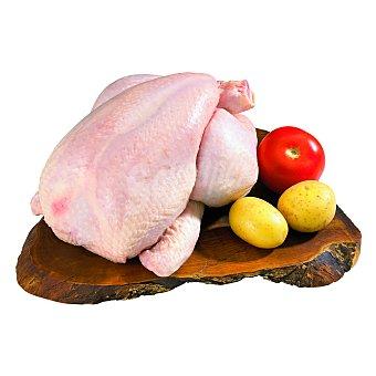 Pollo limpio entero unidad (peso aprox. ) 2.1 kg