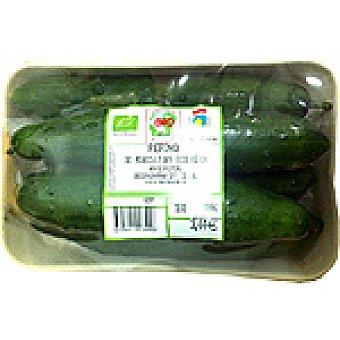Pepino Francés Ecológico - Peso Aproximado Bandeja 1 kg