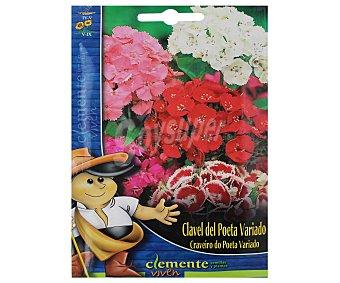 AUCHAN Semillas para plantar Claveles del Poeta de colores variados 1 Gramo