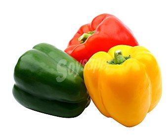 Pimientos de colores Bandeja de 500 gramos