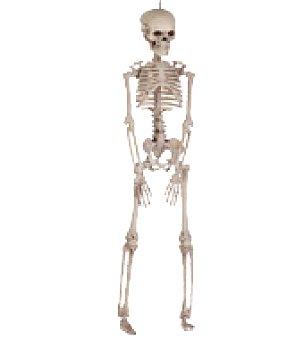 Esqueleto pequeño