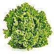 Lechuga batavia verde ecológica 1 unidad Rica rica