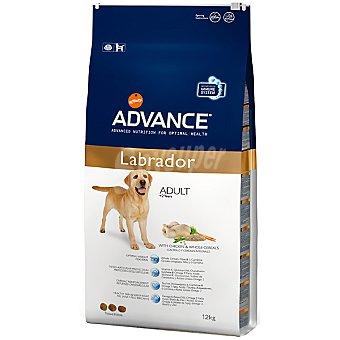 Advance Affinity Alimento para perros de + 2 años con pollo y cereales integrales para una salud óptima Adult Labrador Bolsa 12 kg