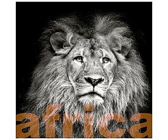 IMAGINE Cuadro con la imagen de un León sobre fondo negro con la palabra áfrica debajo y dimensiones de 50x50 centímetros 1 unidad
