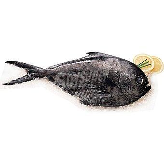 Palometa Negra/Castanyola -  Unidad - Peso Aproximado 1 kg