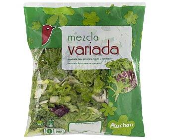 Auchan Ensalada variada (escarola lisa, escarola rizada y radicchio) Bolsa de 200 gramos
