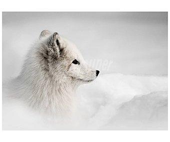 Lienzo de hermoso retrato de cachorro de lobo blanco en el bosque, impreso en canvas, lamina 45x65 cm, artis.