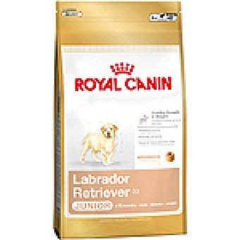 ROYAL CANIN LABRADOR RETRIEVER Junior alimento completo especial para cachorros de raza labrador retriever bolsa 3 kg Bolsa 3 kg